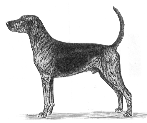UKC Breed Standards: Plott Hound