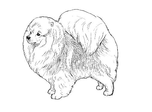UKC Breed Standards: Pomeranian