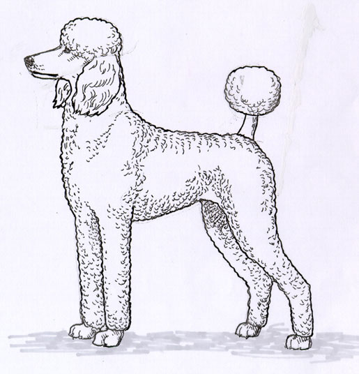 UKC Breed Standards: Poodle-sporting-clip