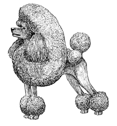 UKC Breed Standards: Poodle