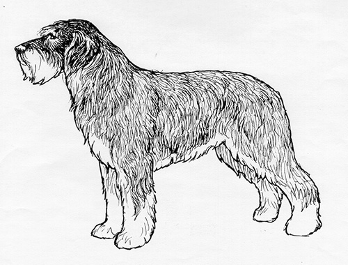 UKC Breed Standards: Portuguese Sheepdog