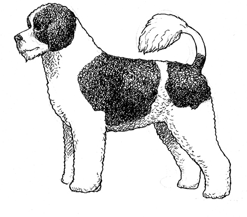 UKC Breed Standards: Portuguese Water Dog (Curly Coat Retriever)