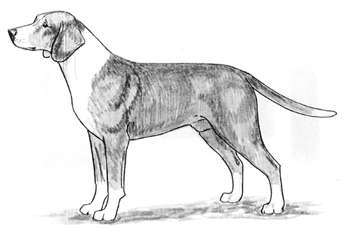 UKC Breed Standards: Posavaz Hound