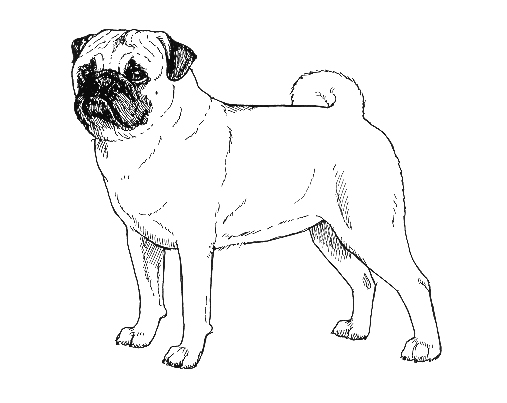 UKC Breed Standards: Pug
