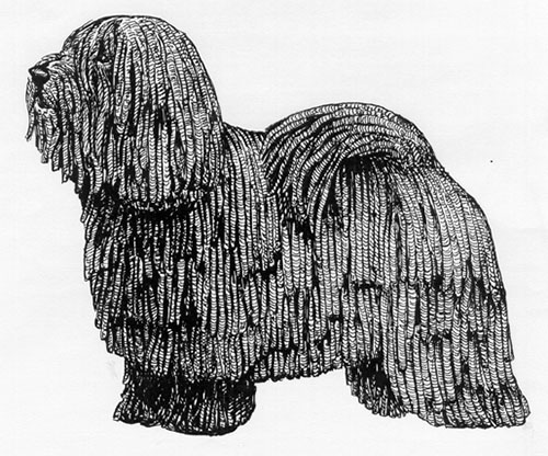 UKC Breed Standards: Puli