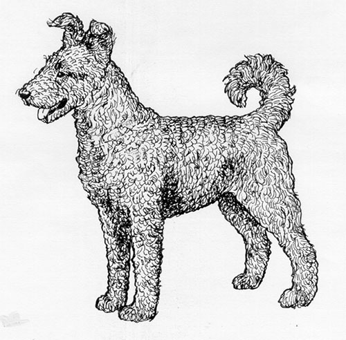 UKC Breed Standards: Pumi