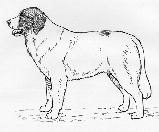 UKC Breed Standards: Pyrnean Mastiff