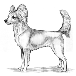 UKC Breed Standards: Russkiy Toy