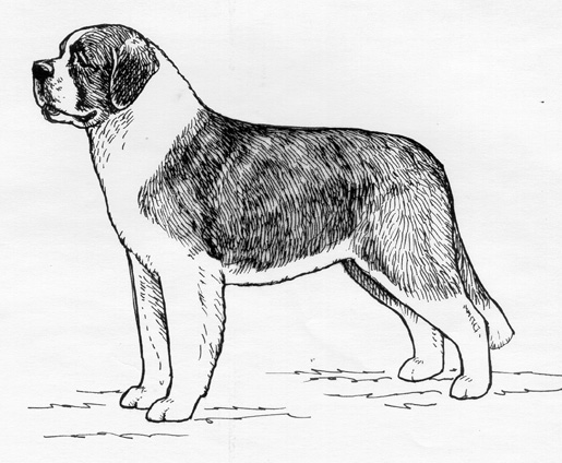 UKC Breed Standards: Saint Bernard
