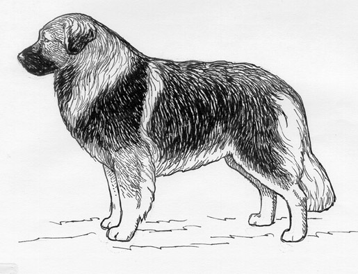 UKC Breed Standards: Sarplaninac