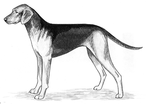 UKC Breed Standards: Schiller Hound