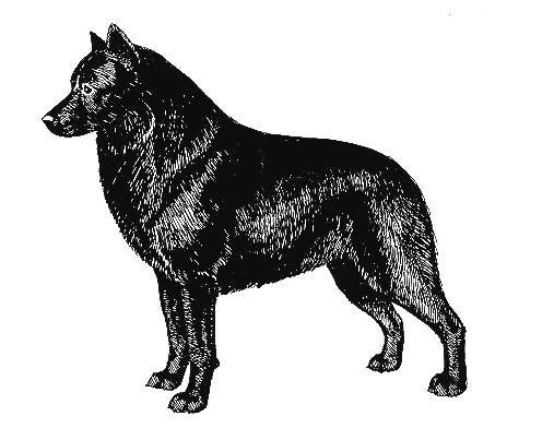 UKC Breed Standards: Schipperke