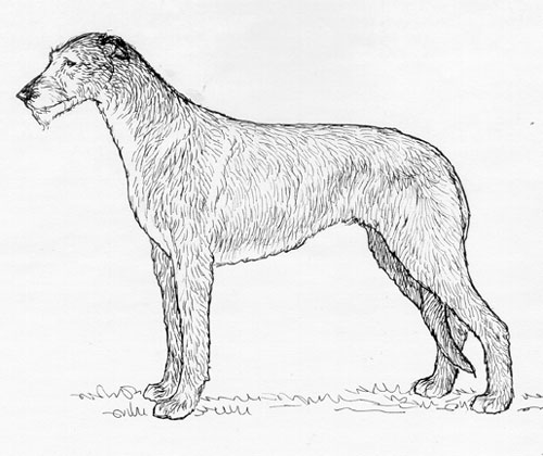 UKC Breed Standards: Scottish Deerhound