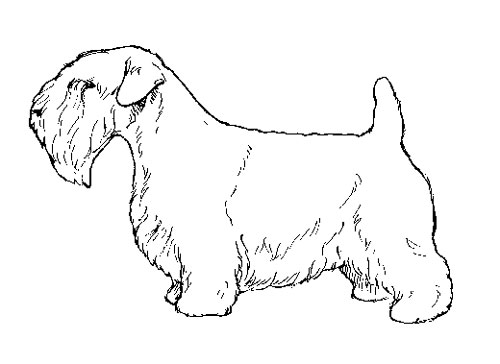 UKC Breed Standards: Sealyham Terrier