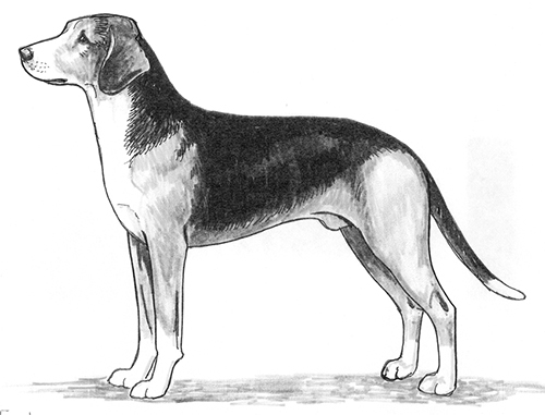UKC Breed Standards: Serbian Tricolor Hound