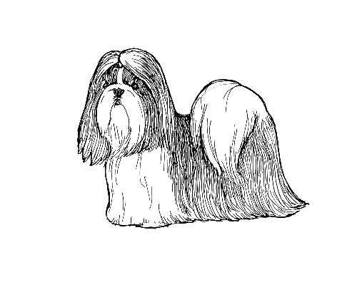 UKC Breed Standards: Shih Tzu