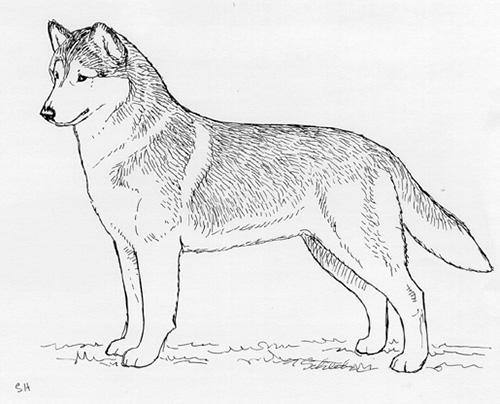 UKC Breed Standards: Siberian Husky