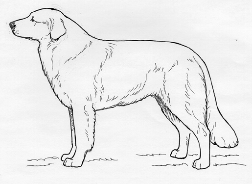 UKC Breed Standards: Slovac Cuvac