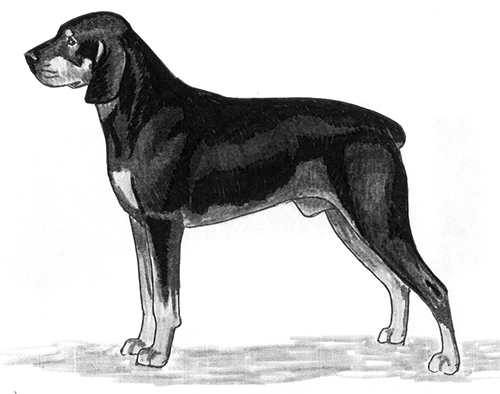 UKC Breed Standards: Smaland Hound