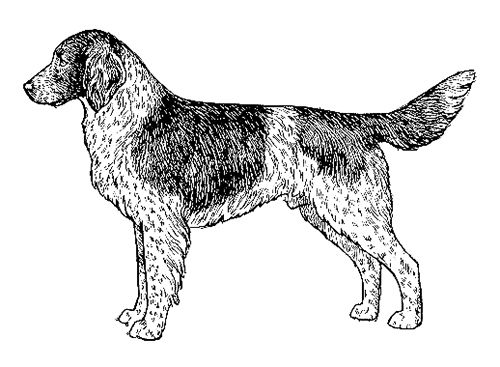 UKC Breed Standards: Small Munsterlander