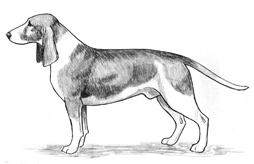 UKC Breed Standards: Small Swiss Hound