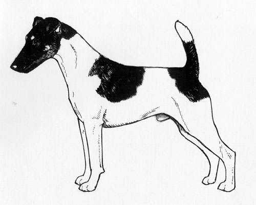 UKC Breed Standards: Smooth Fox Terrier