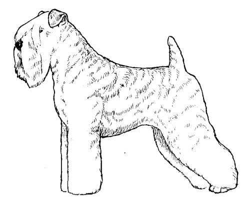 Breed Standards : Soft-Coated Wheaten Terrier | United Kennel Club (UKC)