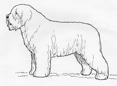 UKC Breed Standards: South Russian Shepherd Dog