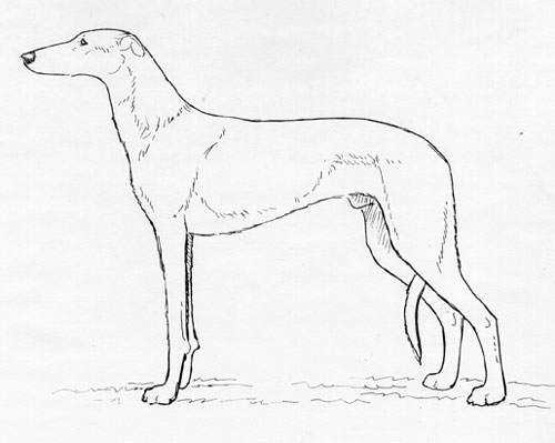 UKC Breed Standards: Spanish Greyhound