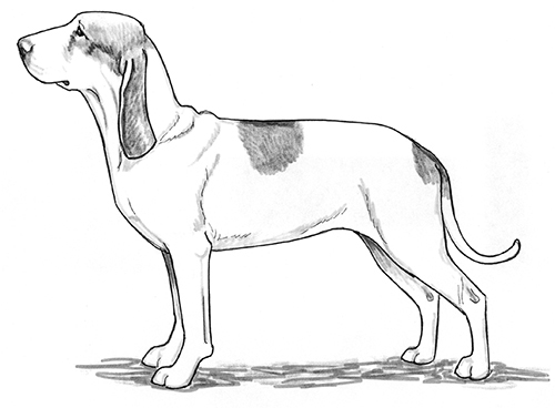 UKC Breed Standards: Spanish Hound