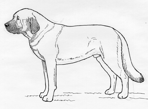 UKC Breed Standards: Spanish Mastiff
