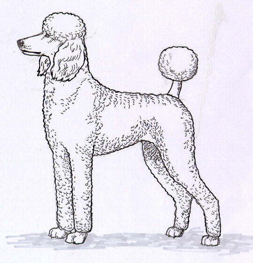 UKC Breed Standards: Multi-Colored Poodle Sporting Clip
