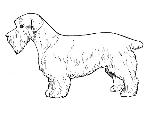 UKC Breed Standards: Sporting Lucas Terrier