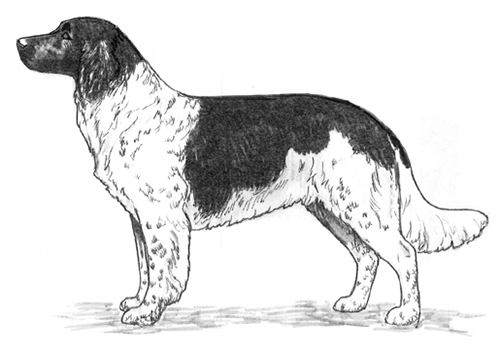 UKC Breed Standards: Stabyhoun