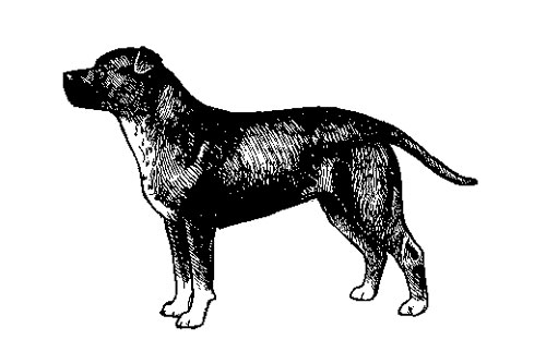 UKC Breed Standards: Staffordshire Bull Terrier