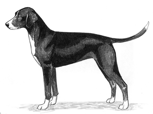 UKC Breed Standards: Stephens' Cur