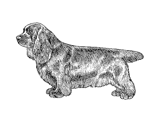 UKC Breed Standards: Sussex Spaniel
