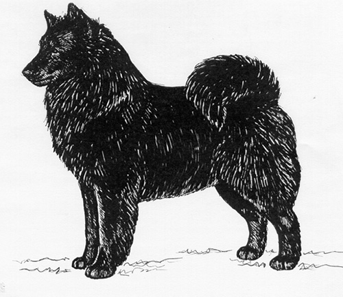 UKC Breed Standards: Swedish Lapphund