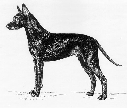 UKC Breed Standards: Thai Ridgeback