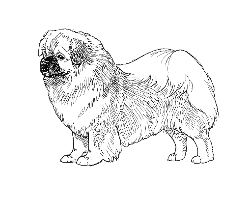 UKC Breed Standards: Tibetan Spaniel