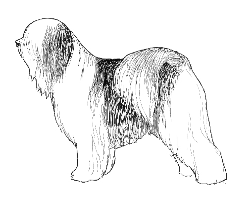 UKC Breed Standards: Tibetan Terrier