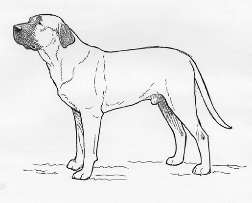 UKC Breed Standards: Tosa Ken