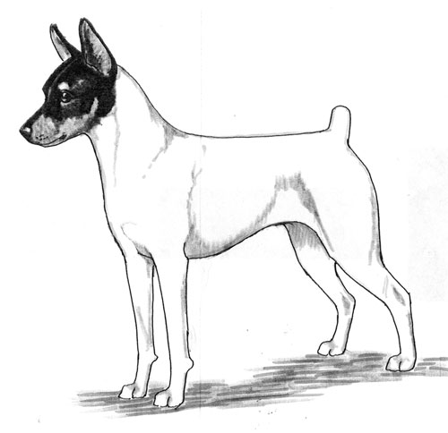 UKC Breed Standards: Toy Fox Terrier