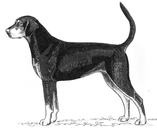 UKC Breed Standards: Transylvanian Hound