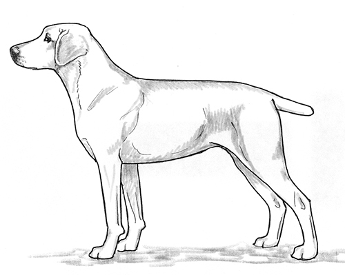 UKC Breed Standards: Treeing Cur