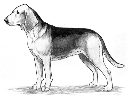 UKC Breed Standards: Tyrolean Hound