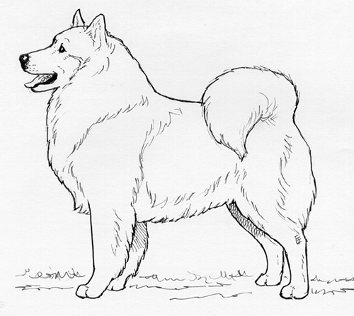 UKC Breed Standards: Volpino Italiano