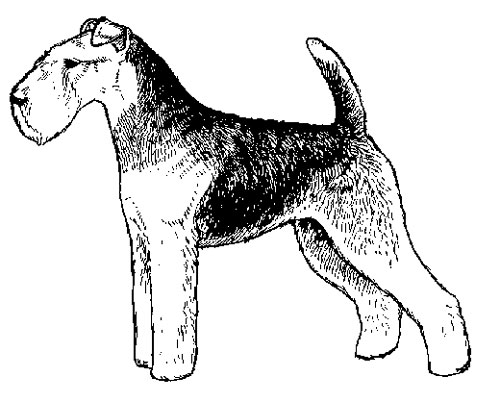UKC Breed Standards: Welsh Terrier