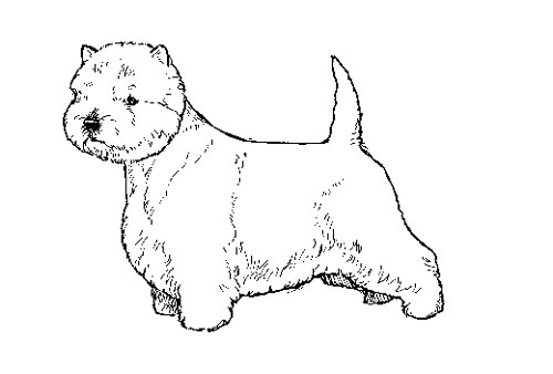 UKC Breed Standards: West Highland White Terrier