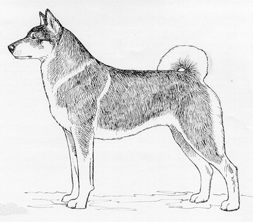 UKC Breed Standards: West Siberian Laika